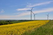 stock photo of wind vanes  - Windturbines on a  yellow field of colza - JPG