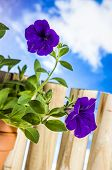 Vivid, bright gardening theme