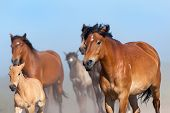 Herd of horses and foals runs on blue sky