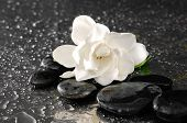 picture of gardenia  - Macro of gardenia with therapy stones - JPG
