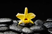 still life with yellow orchid on wet pebbles