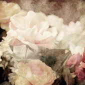 art floral vintage background with white and light pink roses in sepia