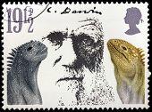 Darwin Stamp
