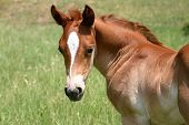 Foal Looking Around