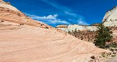 stock photo of pinky  - Pinky rocky waves in Zion National Park USA - JPG