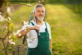 foto of hoe  - Portrait of a handsome senior man gardening in his garden - JPG
