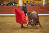 Spanish Bullfighter With The Muleta