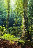 Tropical Rainforest.