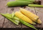 Fresh Corn On Wooden Background