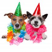 stock photo of dog birthday  - two funny birthday dogs celebrating close together as a couple - JPG