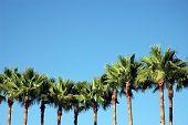 Linie der Palmen