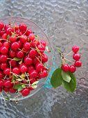 Fresh cherries picked