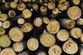Firewood wood pile