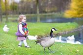 stock photo of baby goose  - Cute Toddler Girl Chasing Wild Geese At A Lake In An Autumn Park - JPG