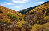 Mountain canyon with autumn leaves