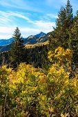 Mountain Meadow with Autumn Leaves