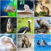 collage pictures of animals from the zoo