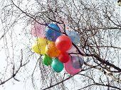 Baloons In Spring Nake Tree Crown
