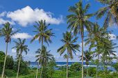 stock photo of samoa  - Tropical Samoa with clear blue waters and coconut palms - JPG