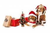 Portrait of two dogs with christmas gift and miniature christmas tree