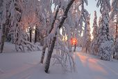 Magic Sunrise In The Snowy Forest