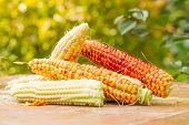 Corn,