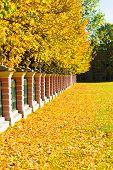 Fence Autumn Park,