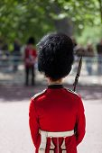 Royal Guard With Bearskin