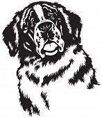 saint bernard dog head