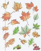 Set of autumn leaves chestnuts acorns and viburnum on a background of notebook sheet in a cage