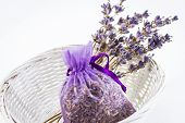 Lavender Flowers and Seeds