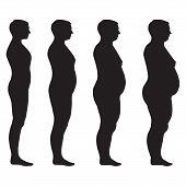 vector fat body,