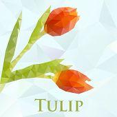 Vector tulip. Abstract flowers geometric. Polygonal design eps10.