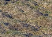 Grass On The Meadow Withered And Bent To Earth