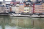 Blurred Image Of Seagull Flying On The Rhone River, Panned Movement, Lyon, France