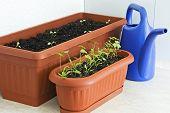 Home green gardening