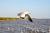 Seagulls Flying On Nature Background.