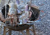 pic of southeast  - Seafood lobster and crabs grilled Thailand Southeast Asia - JPG