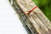 Dragonfly on wooden surface