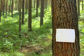 Blank sign on a tree
