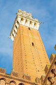 Image of Torre del Mangia in Siena Italy