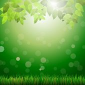 Green Background With Grass, Leafs, Bokeh And Sunshine