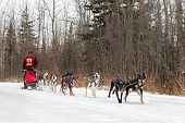 Beargrease 2015 Mid Distance Brian Bergen On Trail