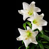 stock photo of condolence  - White lily flowers bouquet on black background - JPG