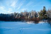 Winter Woodline
