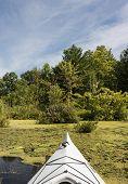 Kayak In A Swamp