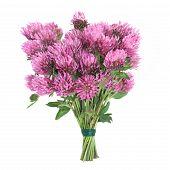 Clover Herb Flower Posy
