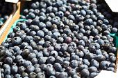 Crated Blueberries At Farmers Market