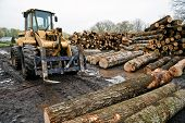 picture of forklift  - Logging industry with forklift and logs ready to go to mill - JPG