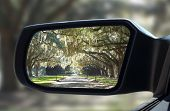 pic of slavery  - Rearview car mirror in forest live green oak trees that hang down in unique pattern - JPG